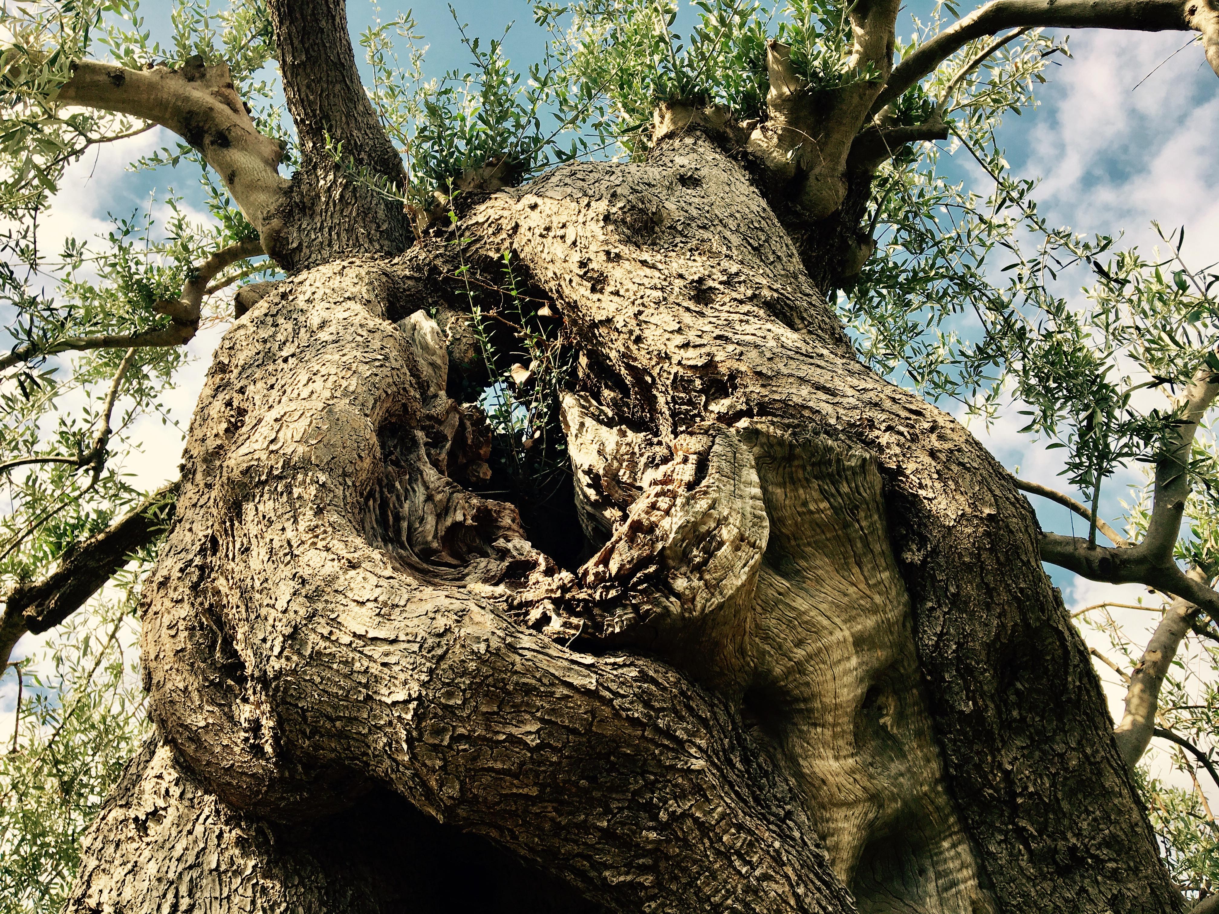 Der schnurgerade Weg durch die Olivenhaine